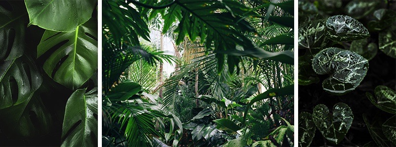 i love urban jungle suzane green. Black Bedroom Furniture Sets. Home Design Ideas