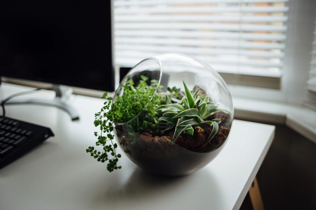 Suspension Pour Plantes D Intérieur les plantes d'intérieur se réinventent - suzane green