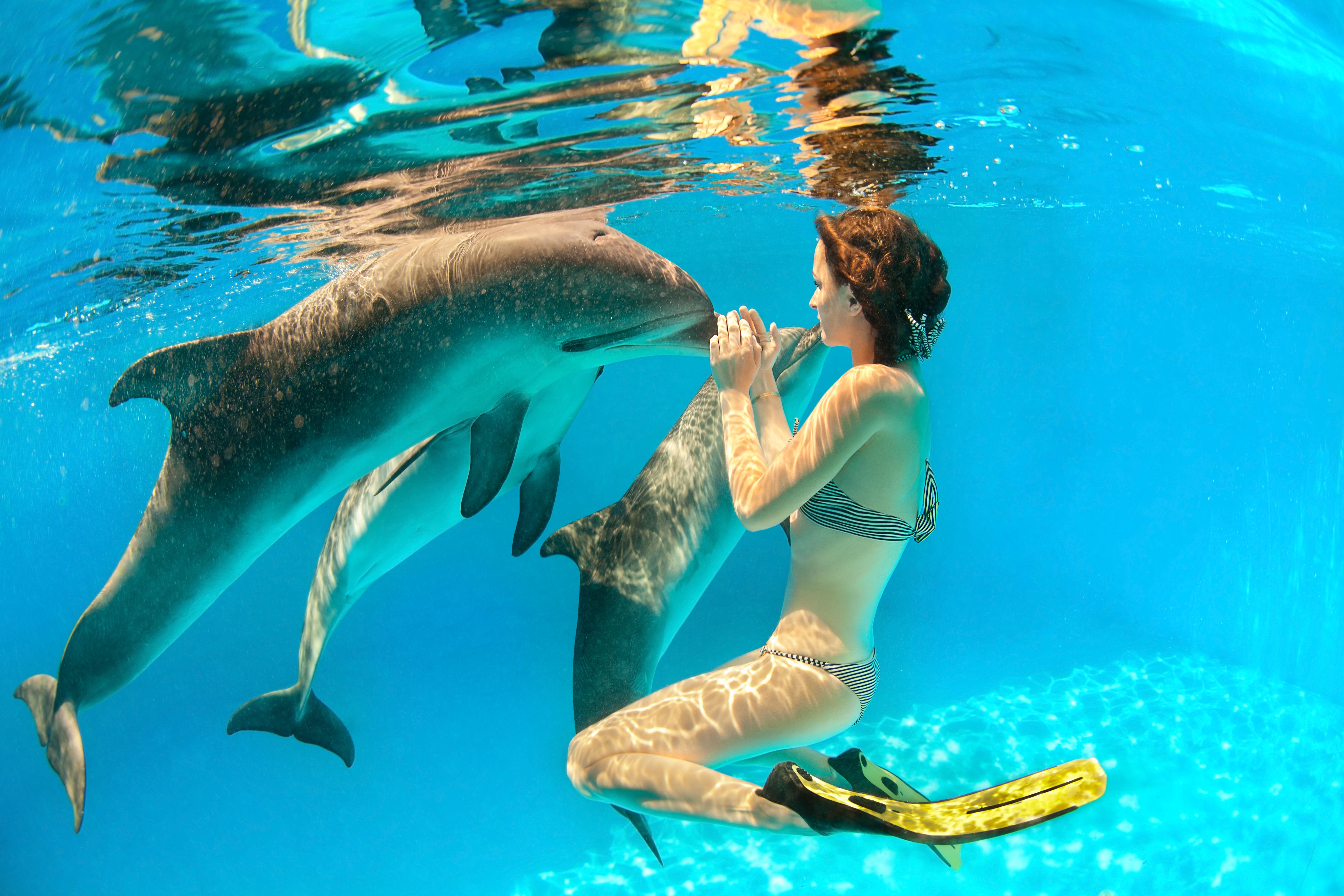 rencontre avec les dauphins femme enceinte